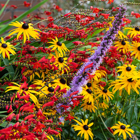 A cacophony of garden colours!