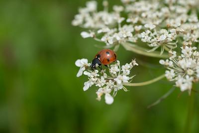 Ladybug Perch
