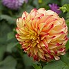Dahlia Garden, Golden Gate Park, San Francisco, CA