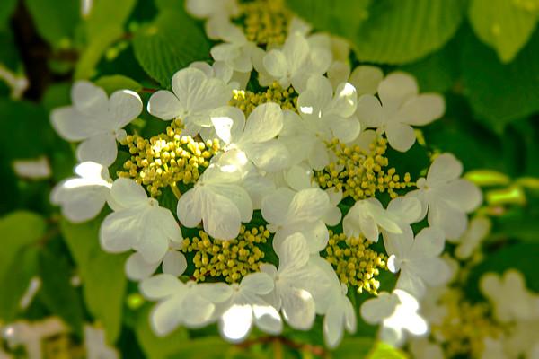 bursting bloom ...