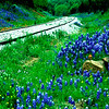 Bluebonnet Express II