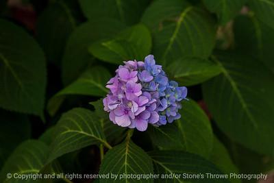 015-flower-ankeny-04sep19-12x08-008-350-3236