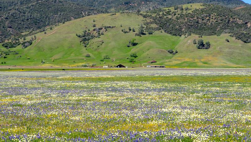 Bear Valley 8754