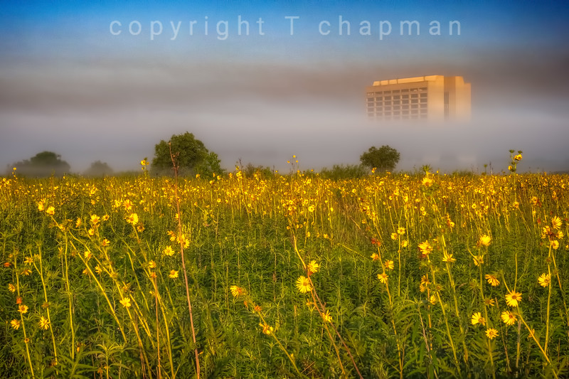 Yellow Field with Fog