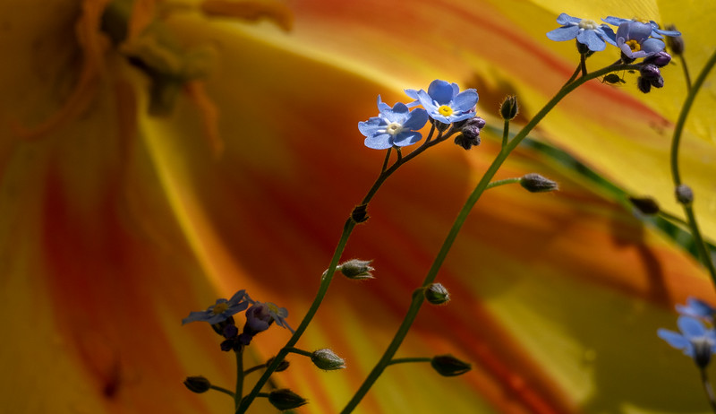 Blue on Yellow & Red 9654
