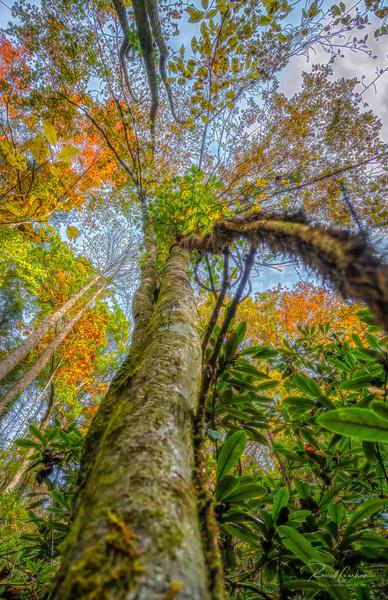 Autumn Tree (2)