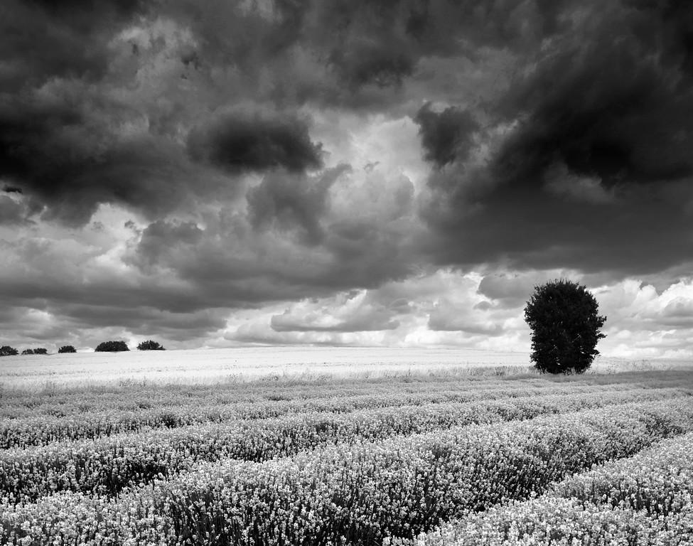 Stormy skies over Lavender