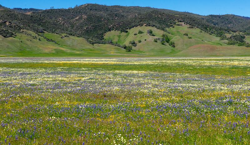 Bear Valley Pasture