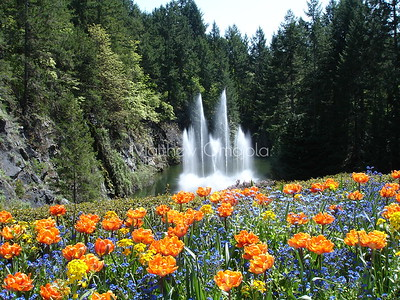 Fountain in old quarry Butchart gardens Victoria BC Canada.