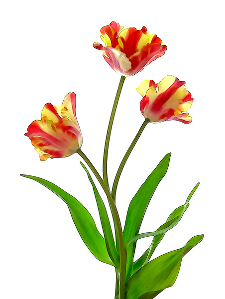 Parrot Tulips in Color