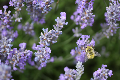 Rosemary and Bee