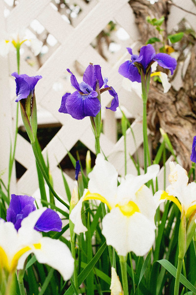flower 06012016_11