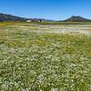 Bear Valley Pasture & Wildflowers