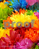 Colorful Stem Dyed Flowers