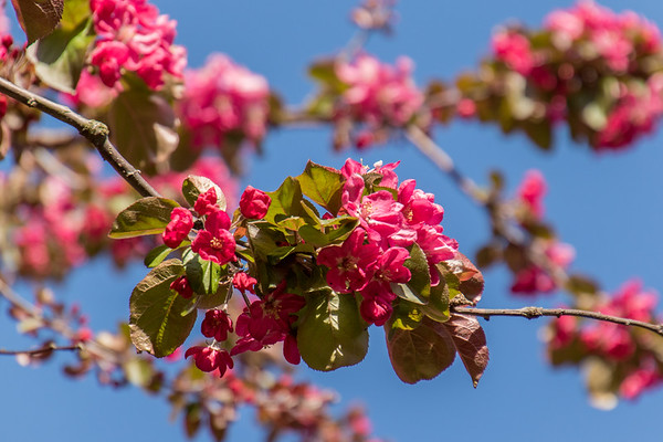 Margate in bloom