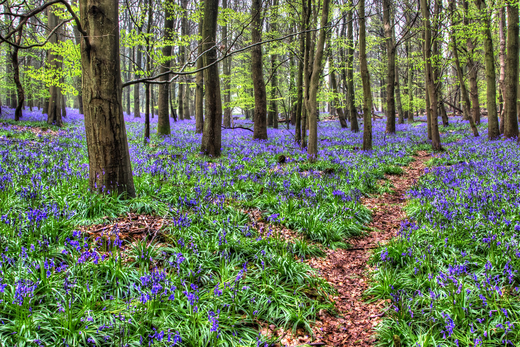 The Path Through Blue Bell Wood