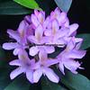 Pretty flower of unknown variety.