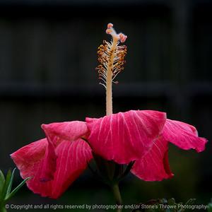 015-flower-ankeny-25oct18-09x09-006-350-8561