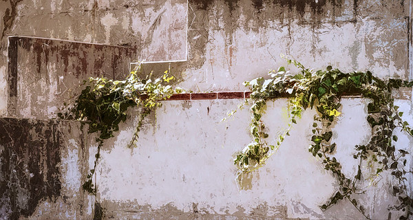 almost ivy covered ...