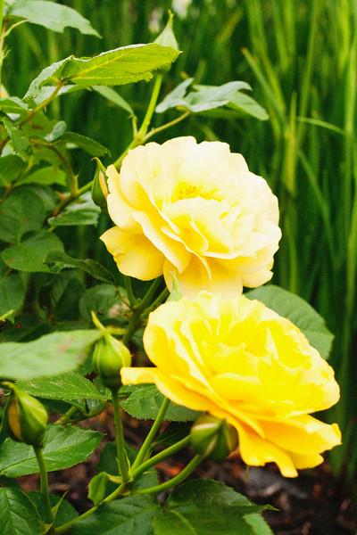 flower 06012016_5