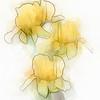 spring iris ...