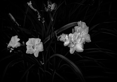 Floral Radiance