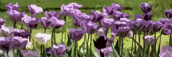 spring bloom ...
