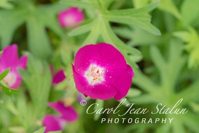 Chicago Botanic Garden June 16, 2016