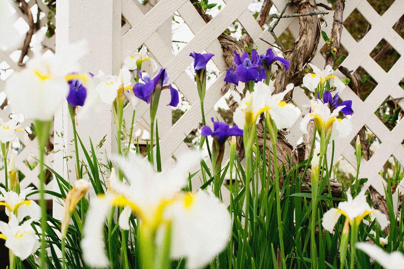 flower 06012016