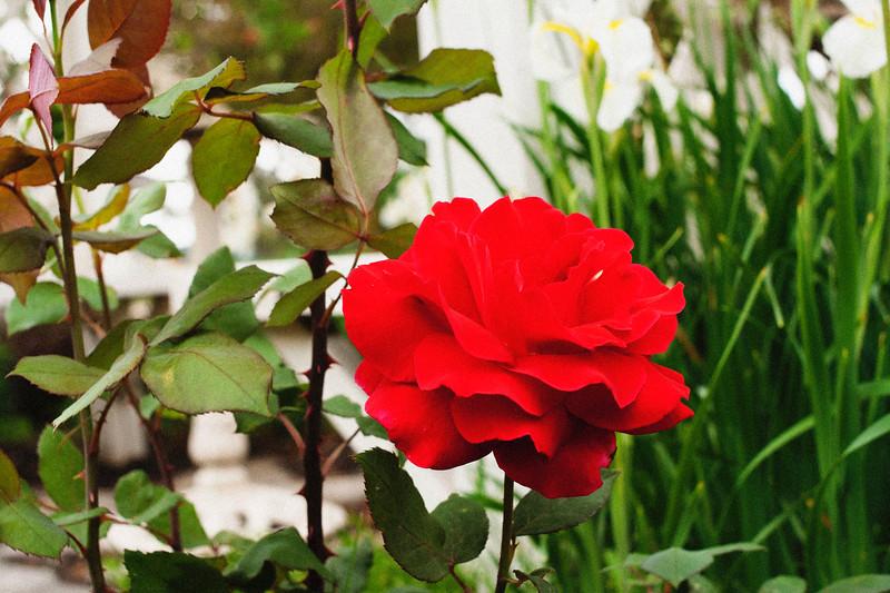 flower 06012016_8