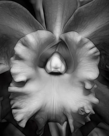 Hillwood Flower - Black White