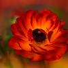 Filoli  Gardens Beauty