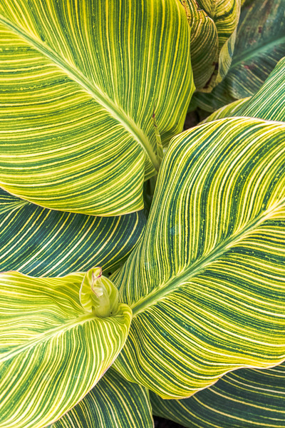 Flora<br /> Location: Sarasota County, FL