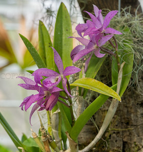 Mounted Orchids