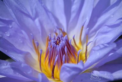 Ten Tips for Better Flower Photographs