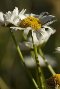 Summer flowers 23