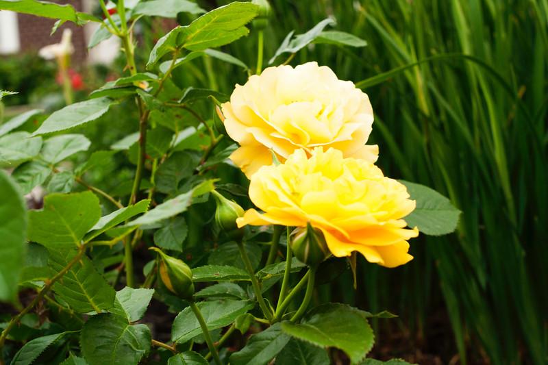 flower 06012016_7