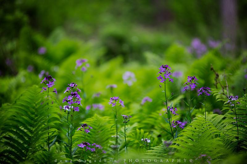 Amongst The Ferns (0193)