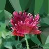 Poppy8