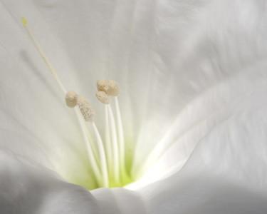 Flower 7280