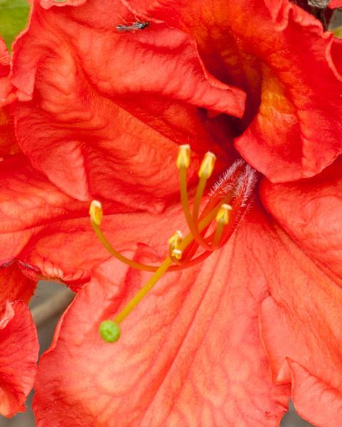 mariasflowers-49