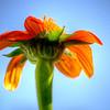Flower from mams garden