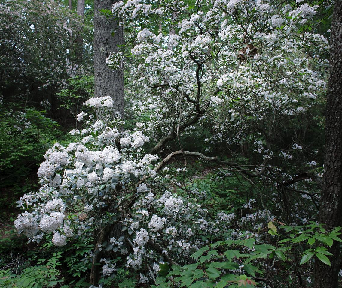 IMAGE: https://photos.smugmug.com/Flowers/i-XxzFsb2/0/dde1b1fa/X2/IMG_7463-090606-X2.jpg