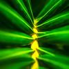 Night Palm