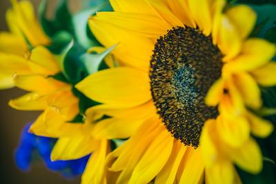 Sunflowers in San Diego