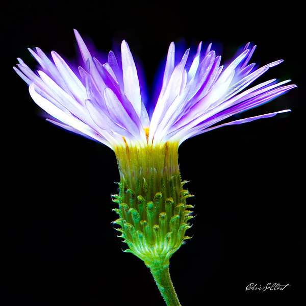 Aster-2