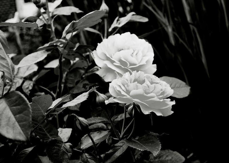 flower 06012016_6