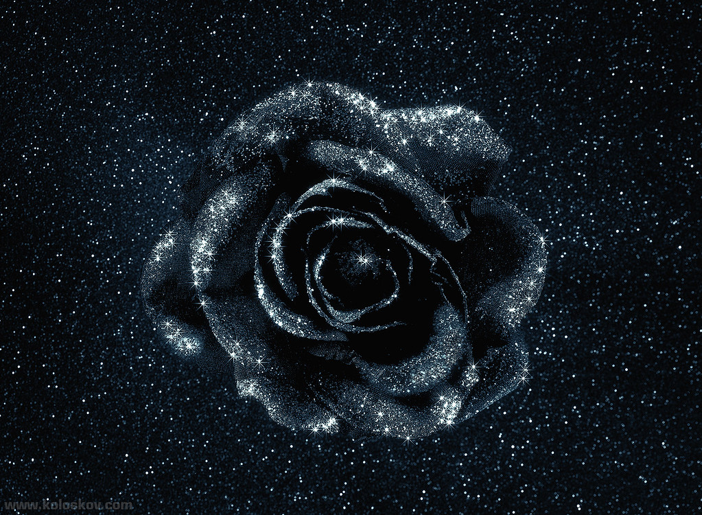 Black Rose. Weekly Photigy Live assignment: http://www.photigy.com/live/