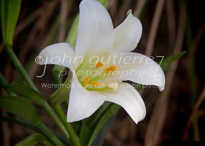 Flowers - Gardens