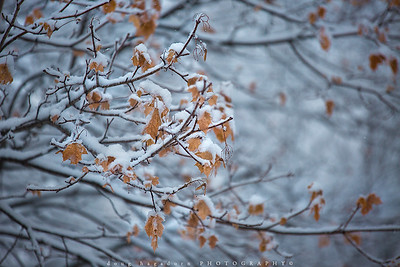 Mixed Seasons (#0660)